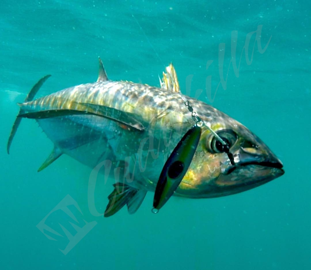 Zcraft Cyclops Jig Panama Yellowfin Tuna