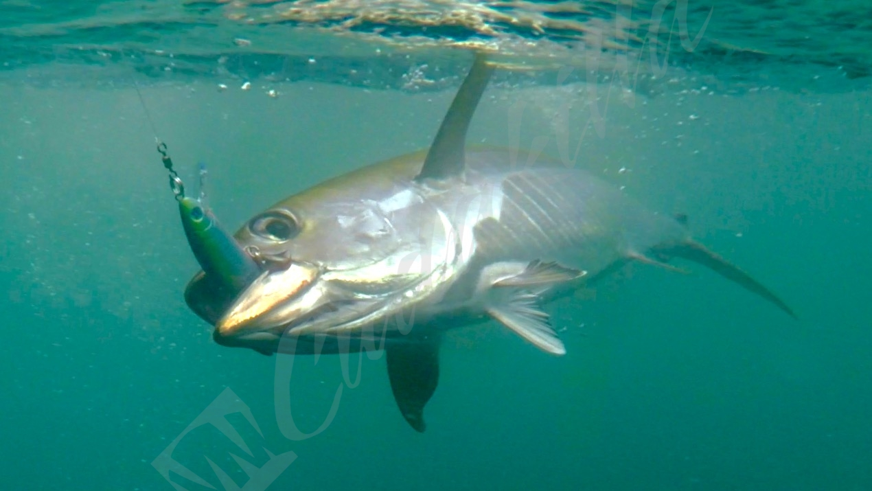 Prohunter Bibless Sinking Minnow with Panama Yellowfin Tuna