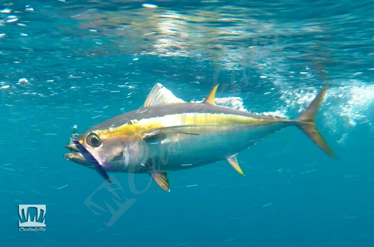 Zcraft Cyclops Jig Yellowfin Tuna
