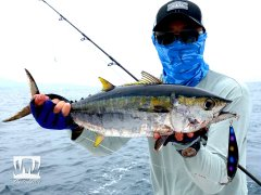 Prohunter Béito HD SW Bibless Fast Sinking Minnow